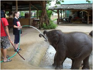 Testimonials 2007 Maddie (age 11) - Steph (age 13) baby elephant drinking