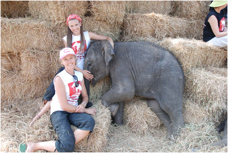 How to help Elephantstay