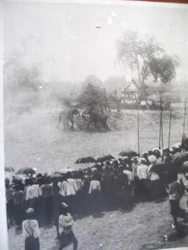 Elephant Kraal 2