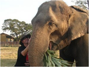Testimonials 2007 Steve and Trudy kissing elephant