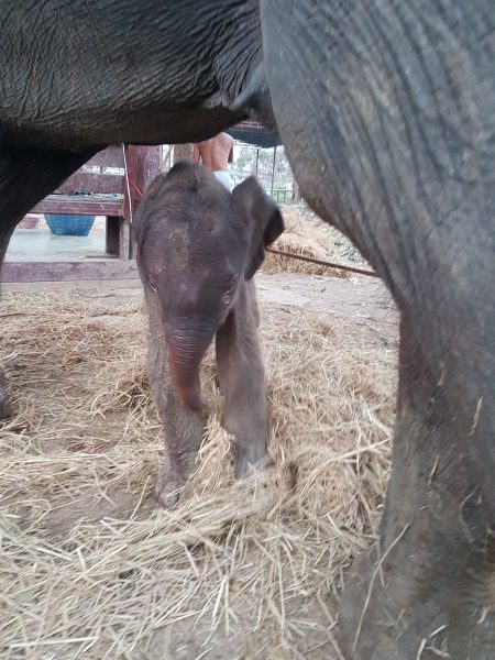Jumjuree's baby a few hours old