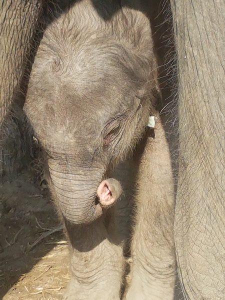 Jumjuree's baby Day 2