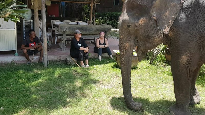 Royal Elephant Kraal Village